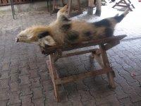 1_schwein